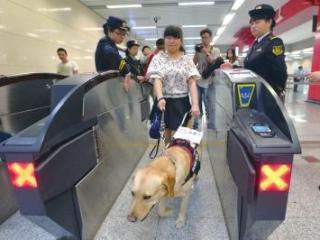 导盲犬可进 吃东西不行 成都城市轨道交通管理条例报请审议