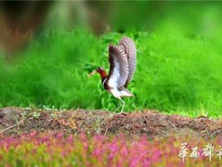 千只画眉会战南充 中华鸟王争霸赛4月9日开赛