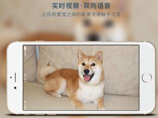 宠物也能共享?成都物联网创业公司的宠物智能硬件玩法