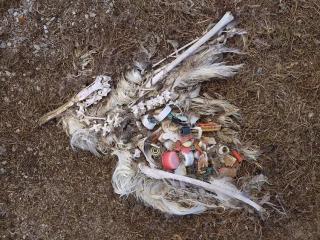 面对令人心碎的环境污染照片,创业者该为环保做出什么努力?
