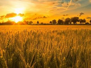 AI+农业:我们走近了这些已经悄然落地的应用
