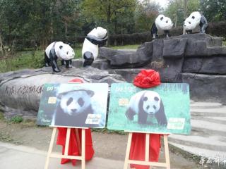 """浦发推出""""动感熊猫""""信用卡 助力大熊猫公益事业"""