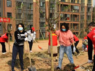 """植树造林改善环境 万安街道再添""""新绿"""""""