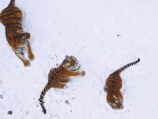 《航拍中国》每一帧都美到想截图
