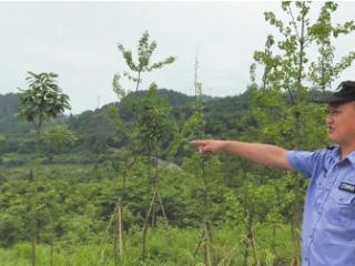 放下百万身家 守护龙泉山城市森林公园