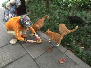 七旬阿婆义务喂猫  鸡汤、肉饭六年来天天不断
