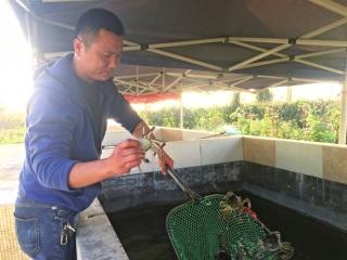 从农家乐到养殖基地 龙泉山下养出澳洲龙虾