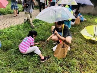 以花為媒共建宜居環境 數百棵芙蓉花苗扮靚卓錦城