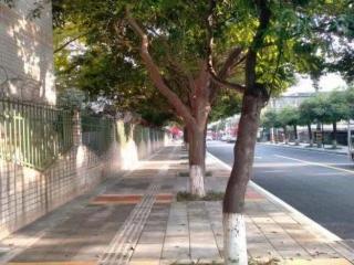 """成都市溫江區15條人行道""""動手術"""" 今后上街不再怕""""水雷"""""""