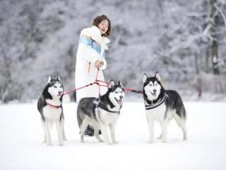 2021西岭雪山宠游记 让狗狗在冰雪世界撒欢