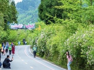 """""""五一""""假期彭州实现旅游收入3.43亿元 多项数据创新高"""