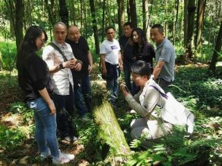 都江堰市国有林场 修复人工林打造理想大熊猫栖息地