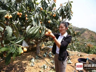 女大学生返乡创业 将攀枝花枇杷卖到加拿大