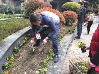 茶店社区栽花种草美化院落环境