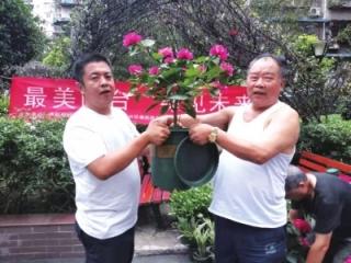 南虹村社区开展绿植发放活动